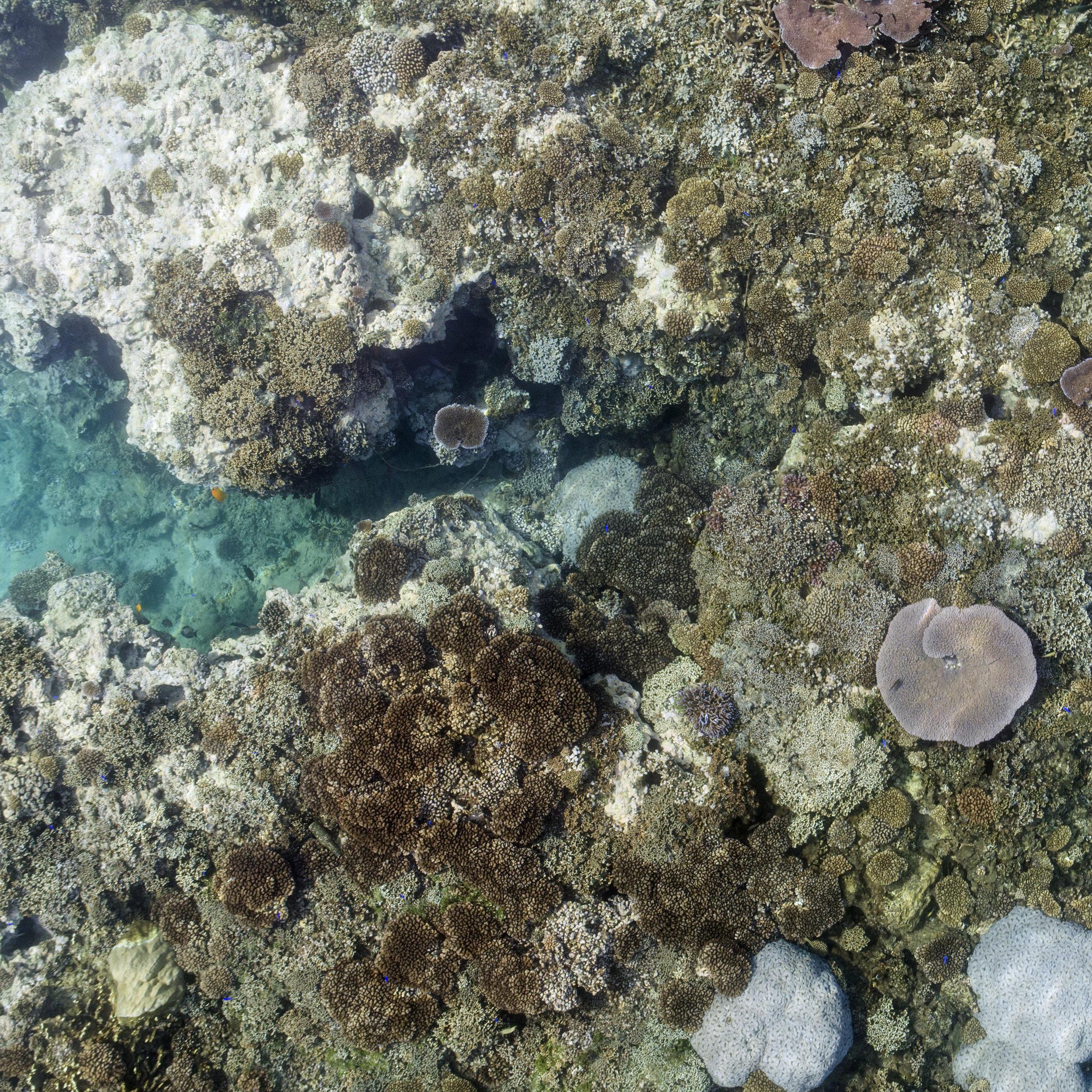 alegra bay, american samoa credit: diane burko / coral reef image bank
