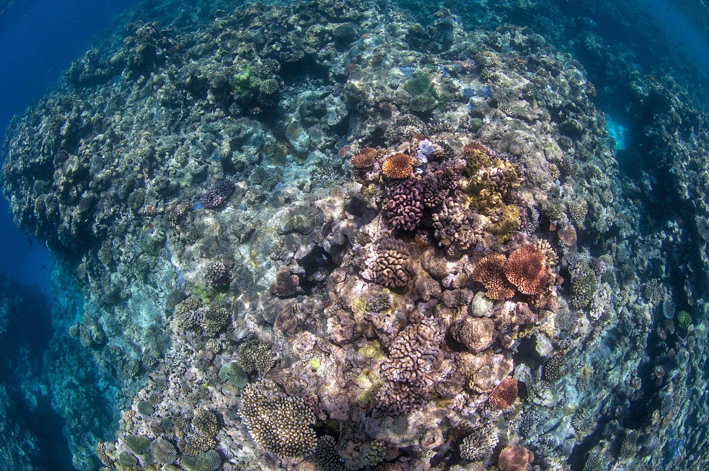 birdseye of coral in the Great barrier reef credit: jayne jenkins / coral reef image bank