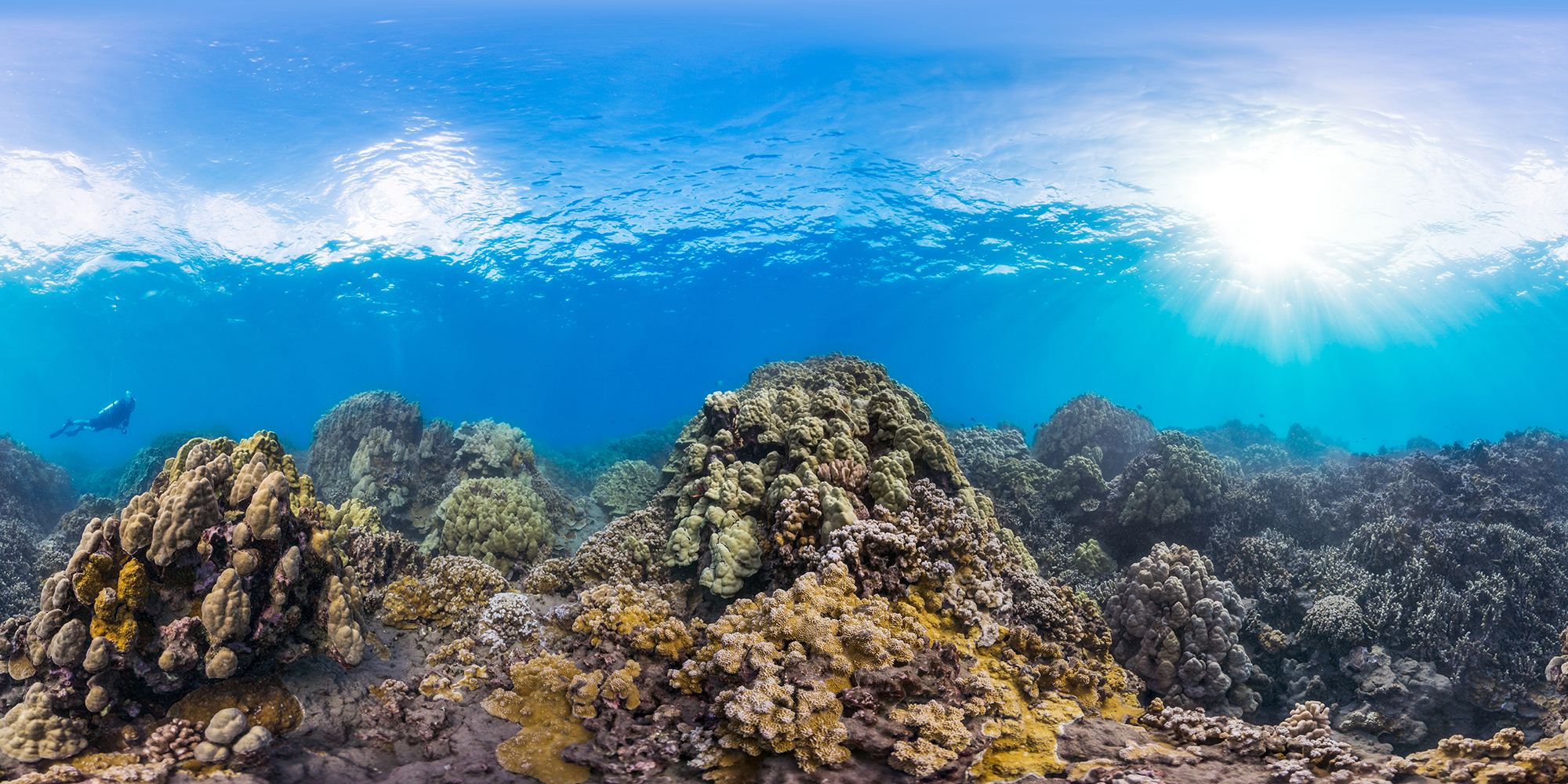 GREAT BARRIER REEF CREDIT: THE OCEAN AGENCY / XL CATLIN SEAVIEW SURVEY