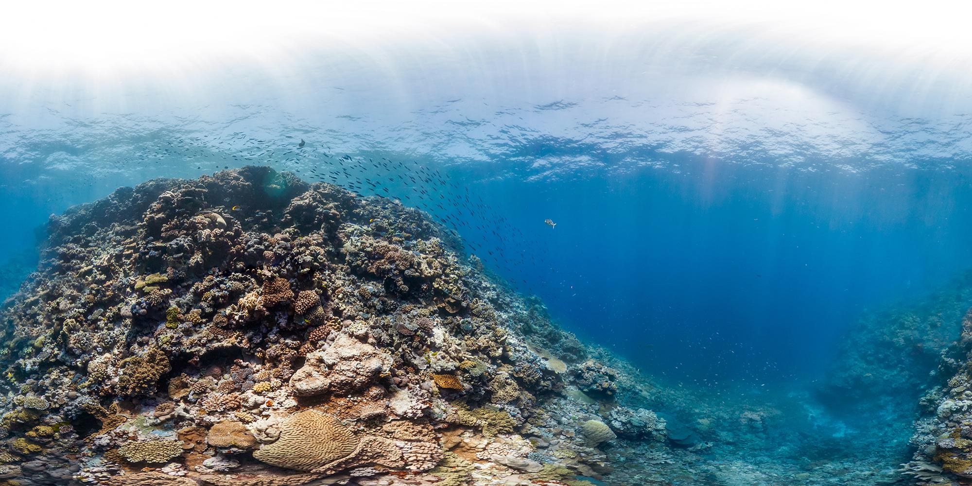 mantis reef, GREAT BARRIER REEF CREDIT: THE OCEAN AGENCY / XL CATLIN SEAVIEW SURVEY