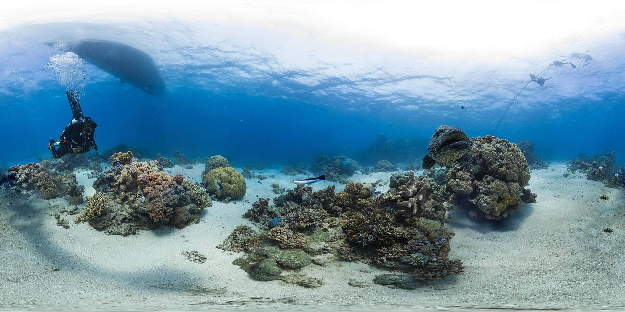 cod hole, GREAT BARRIER REEF CREDIT: THE OCEAN AGENCY / XL CATLIN SEAVIEW SURVEY