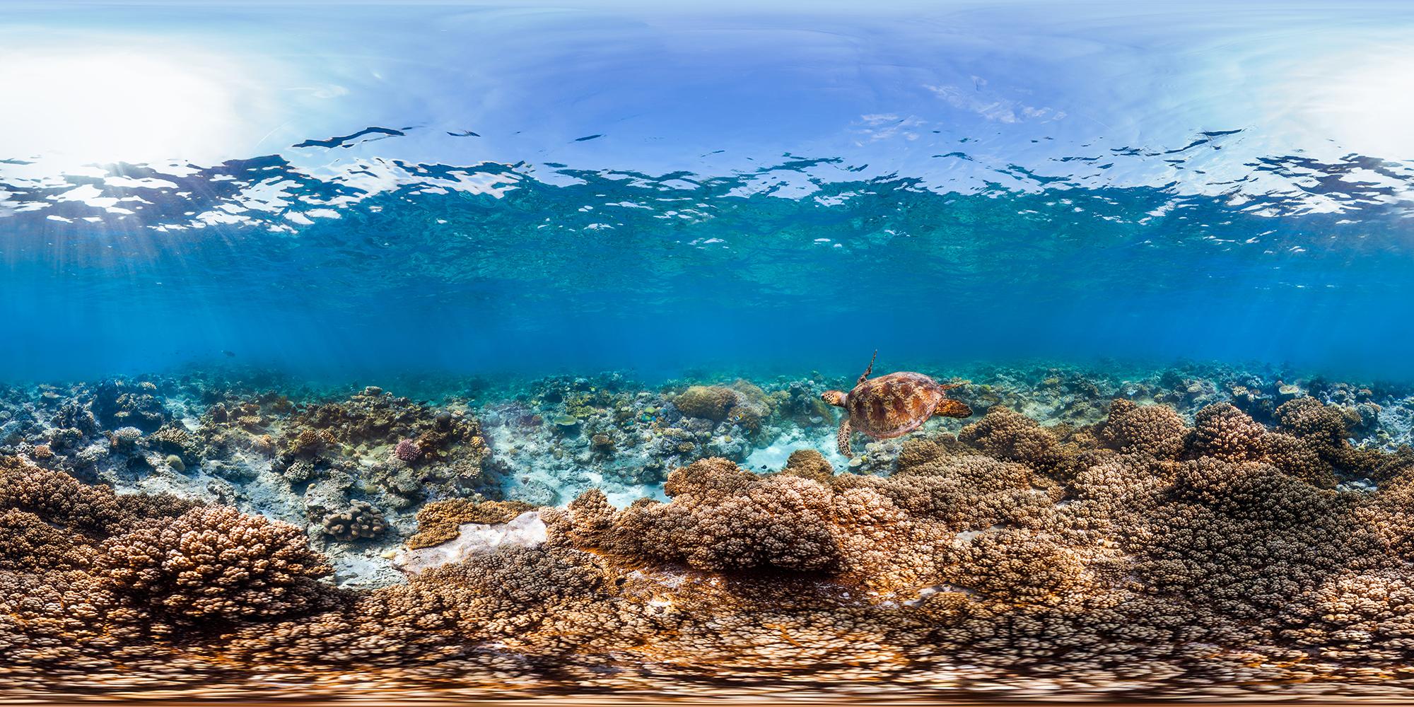 norman REEF, GREAT BARRIER REEF CREDIT: THE OCEAN AGENCY / XL CATLIN SEAVIEW SURVEY