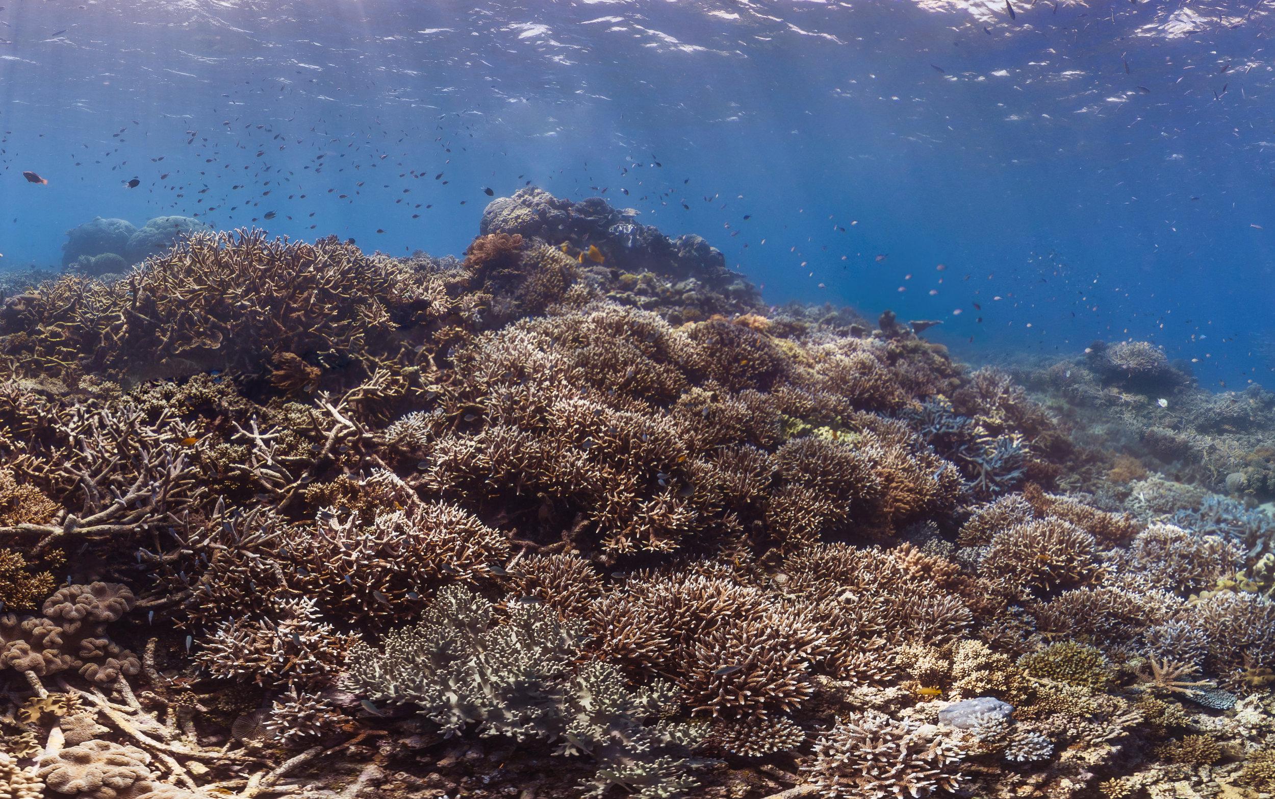 destin reef, great barrier reef credit: The ocean agency / coral reef image bank