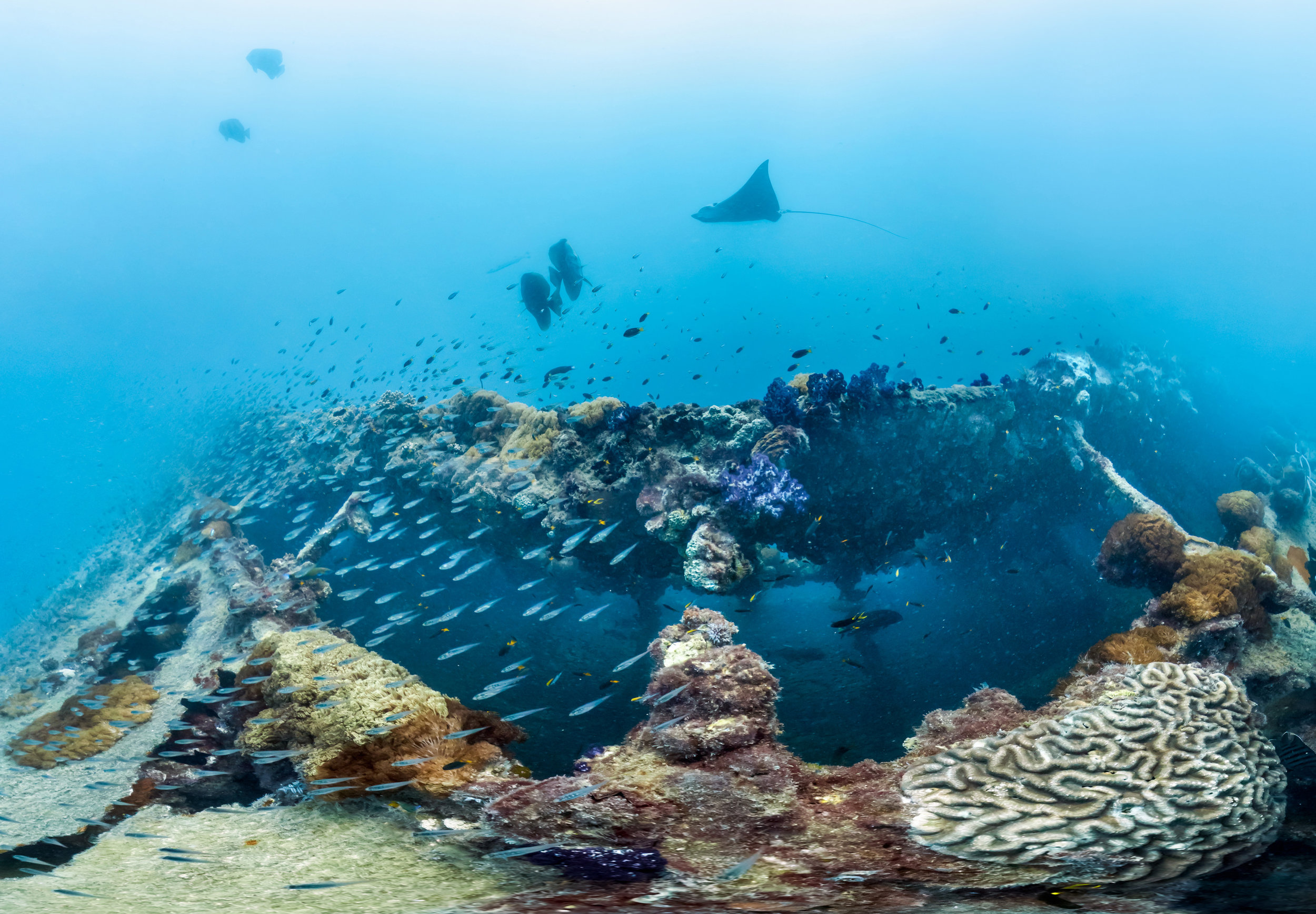 the yongala wreck, great barrier reef credit; the ocean agency / coral reef image bank