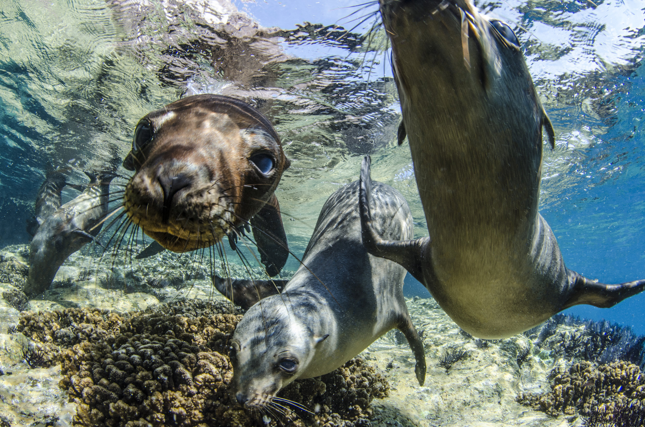 seals in the galapagos credit: Amanda cotton / coral reef image bank