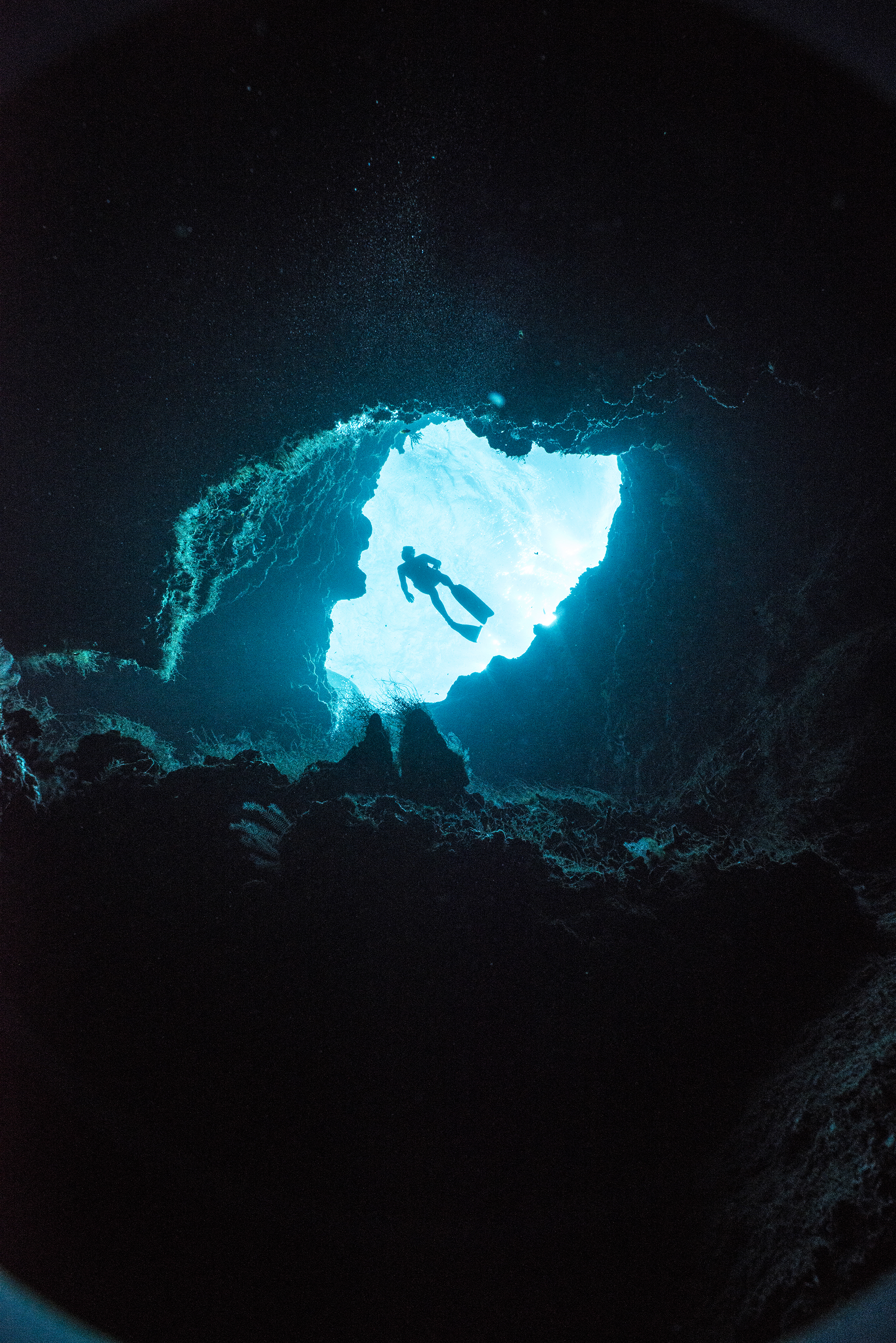 diver in cavern credit: Amanda cotton / coral reef image bank