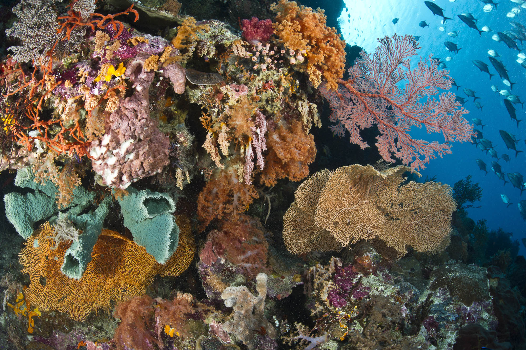 Wakatobi , Indonesia credit: Warren Baverstock / Coral reef image bank