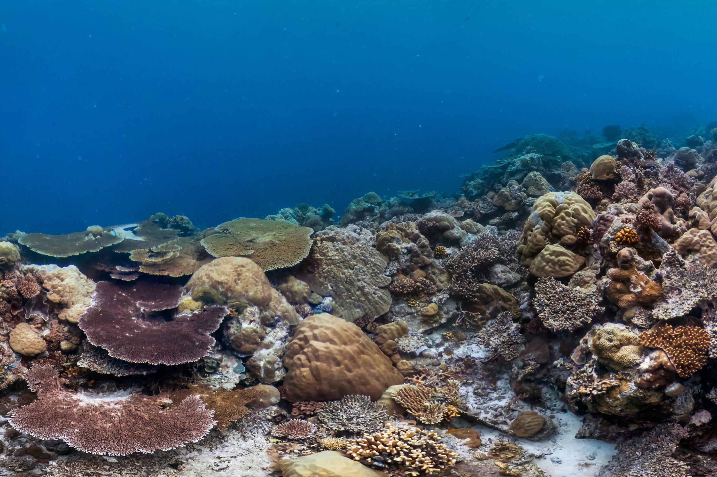 PALAU credit: Jayne Jenkins / coral reef image bank