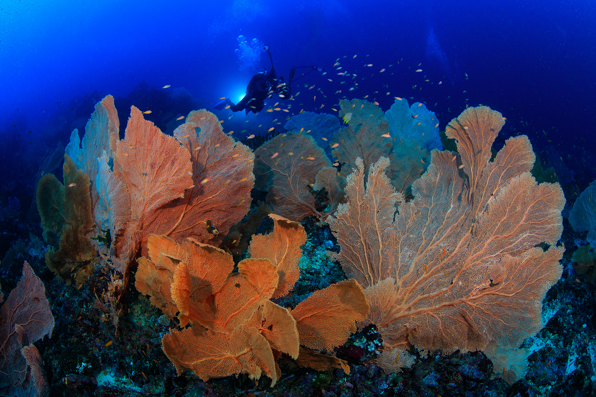 palau weh, indonesia credit: yen-yi lee /coral reef image bank