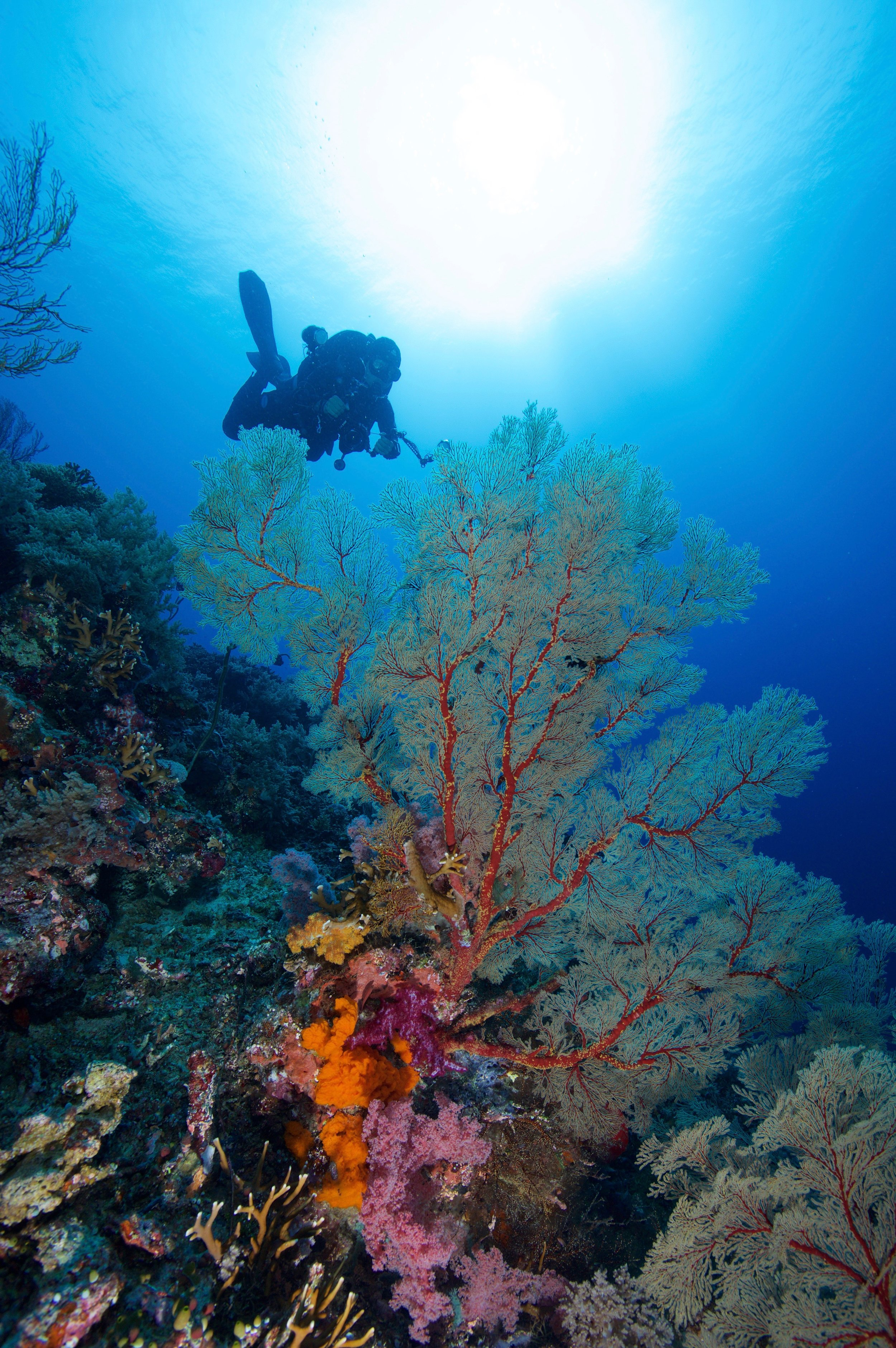 TUBBATAHA, PHILIPPINES CREDIT: gregory piper / coral reef image bank