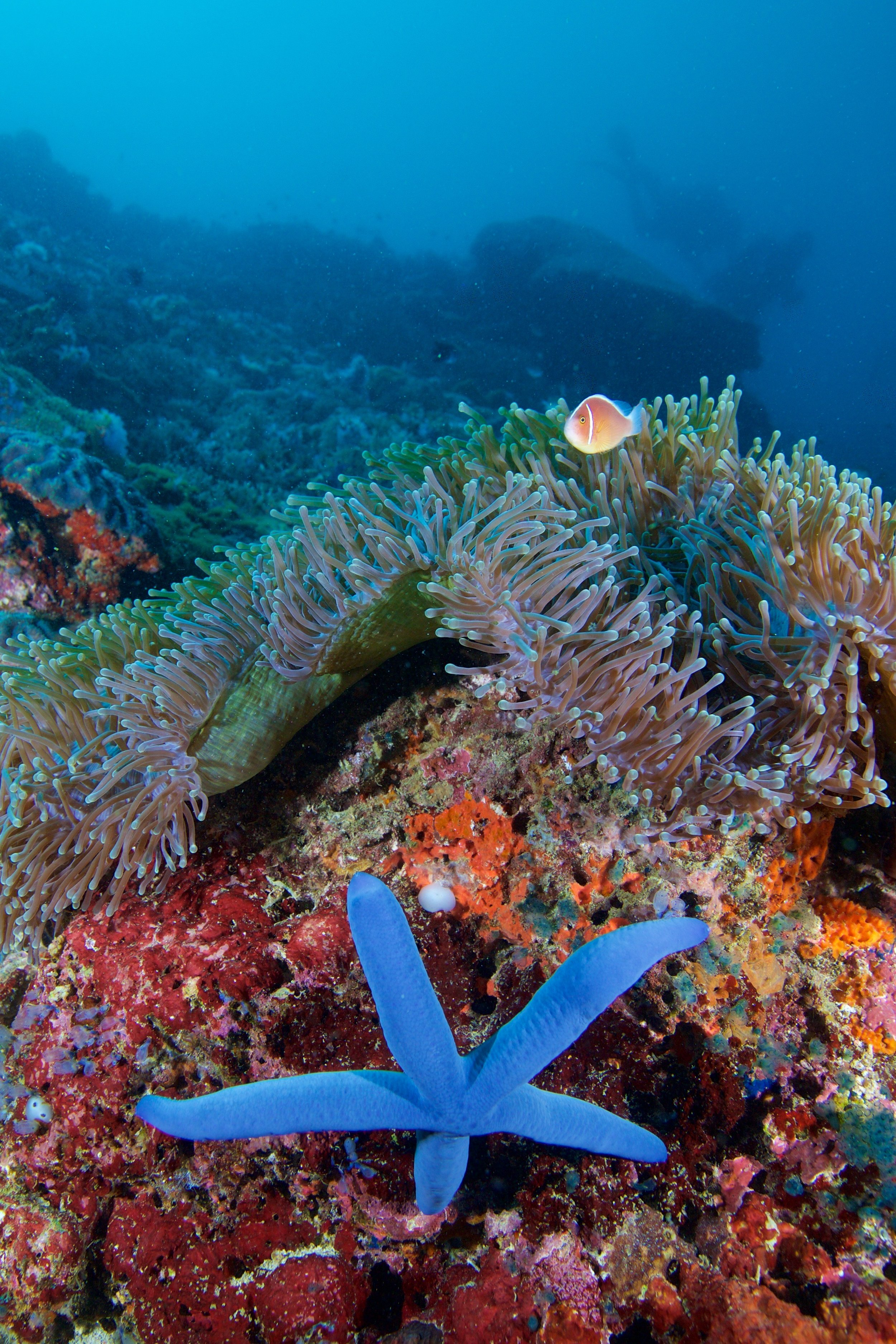DUMAGUETE, PHILIPPINES CREDIT: GREGORY PIPER / coral reef image bank