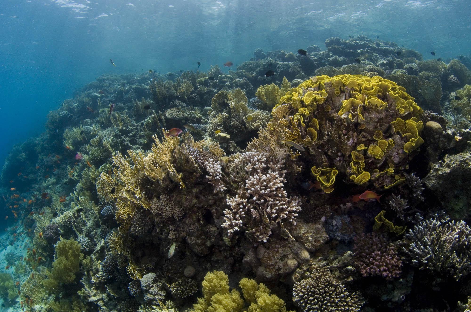 AQABA CREDIT: WARREN BAVERSTOCK / coral reef image bank