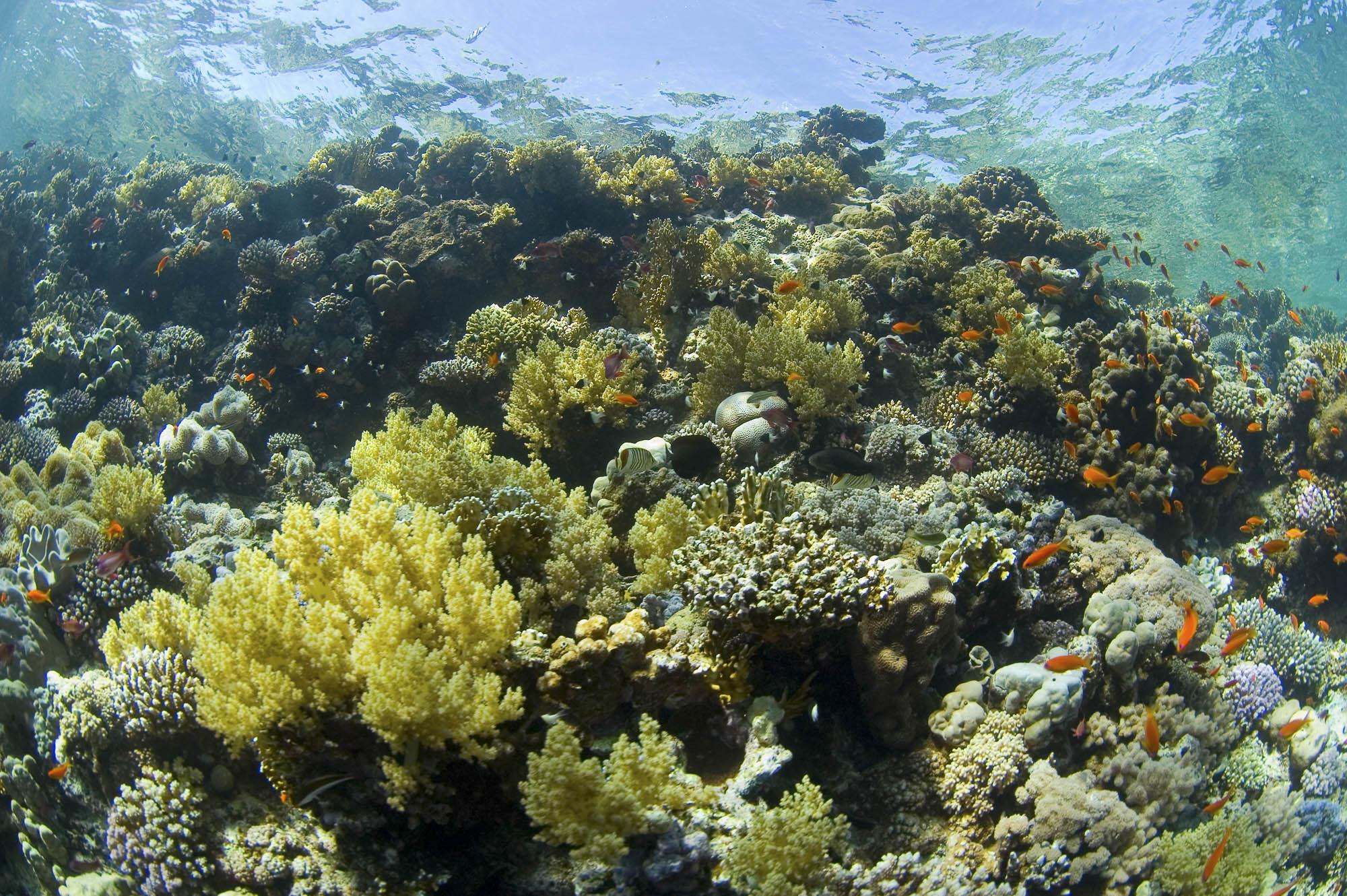 STRAITS OF TIrAN CREDIT: WARREN BAVERSTOCK / coral reef image bank