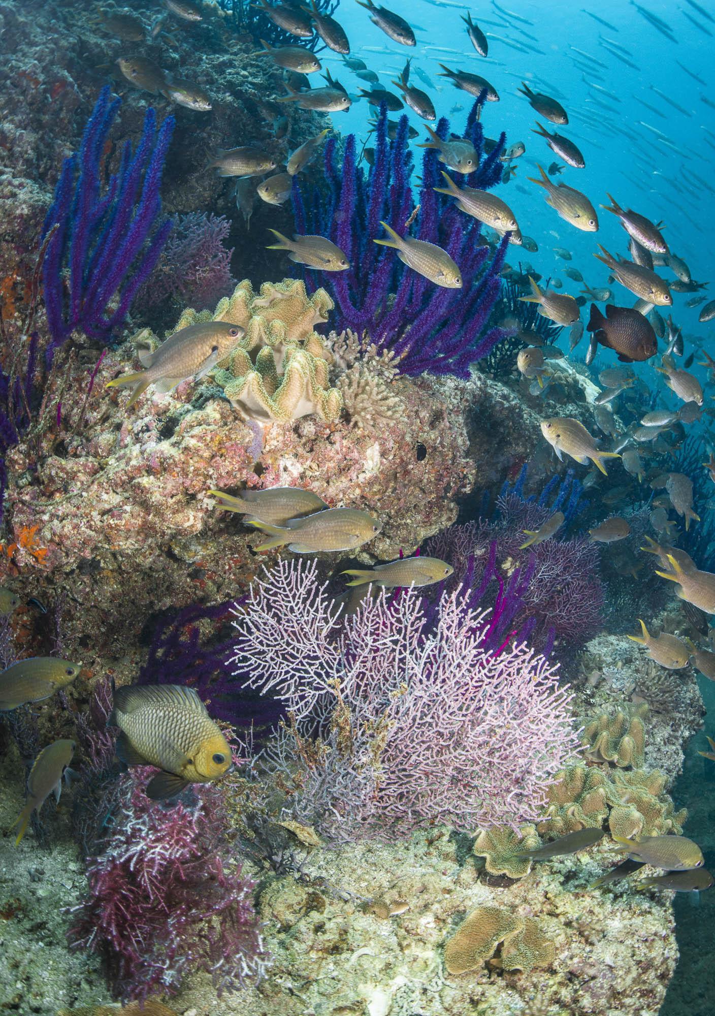 Daymaniyats, OMAN CREDIT: WARREN BAVERSTOCK / coral reef image bank