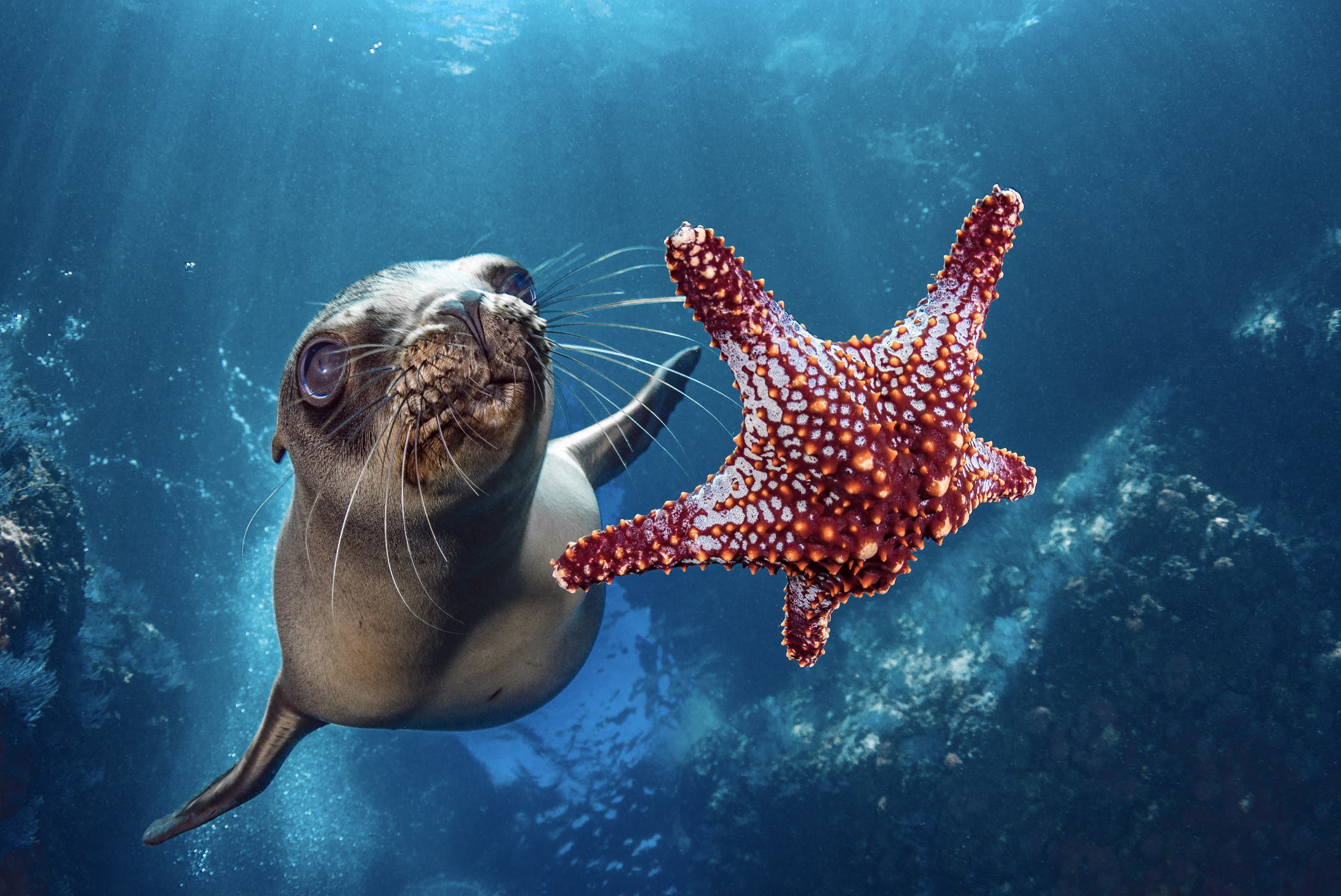 california sea lion, baja california credit: hannes klostermann / coral reef image bank