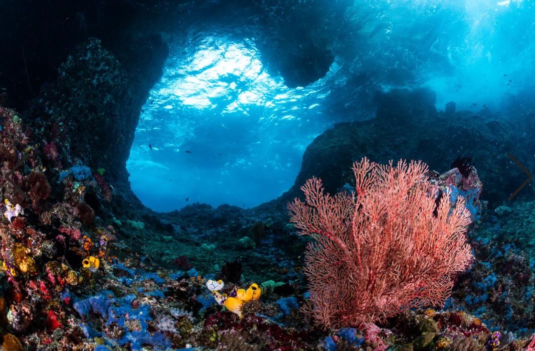 swim-through, raja ampat credit: tracey jennings / coral reef image bank