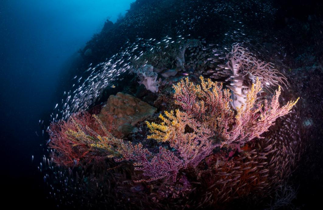 fish around a fan, raja ampat credit: tracey jennings / coral reef image bank