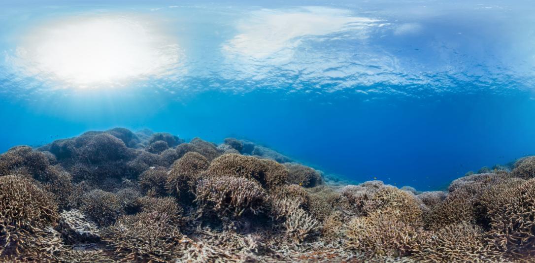 kerama, okinawa, Japan CREDIT: THE OCEAN AGENCY / CORAL REEF IMAGE BANK