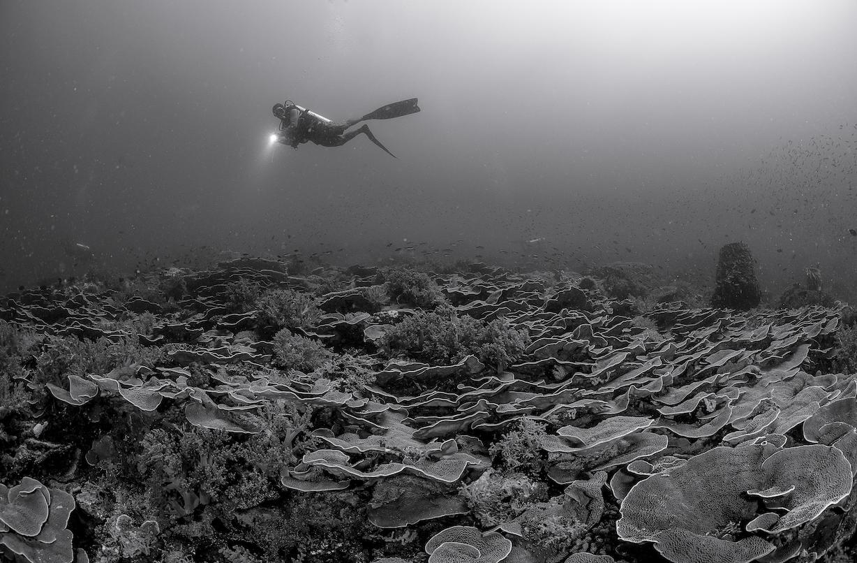 diver in raja ampat CREDIT: tracey jennings / coral reef image bank