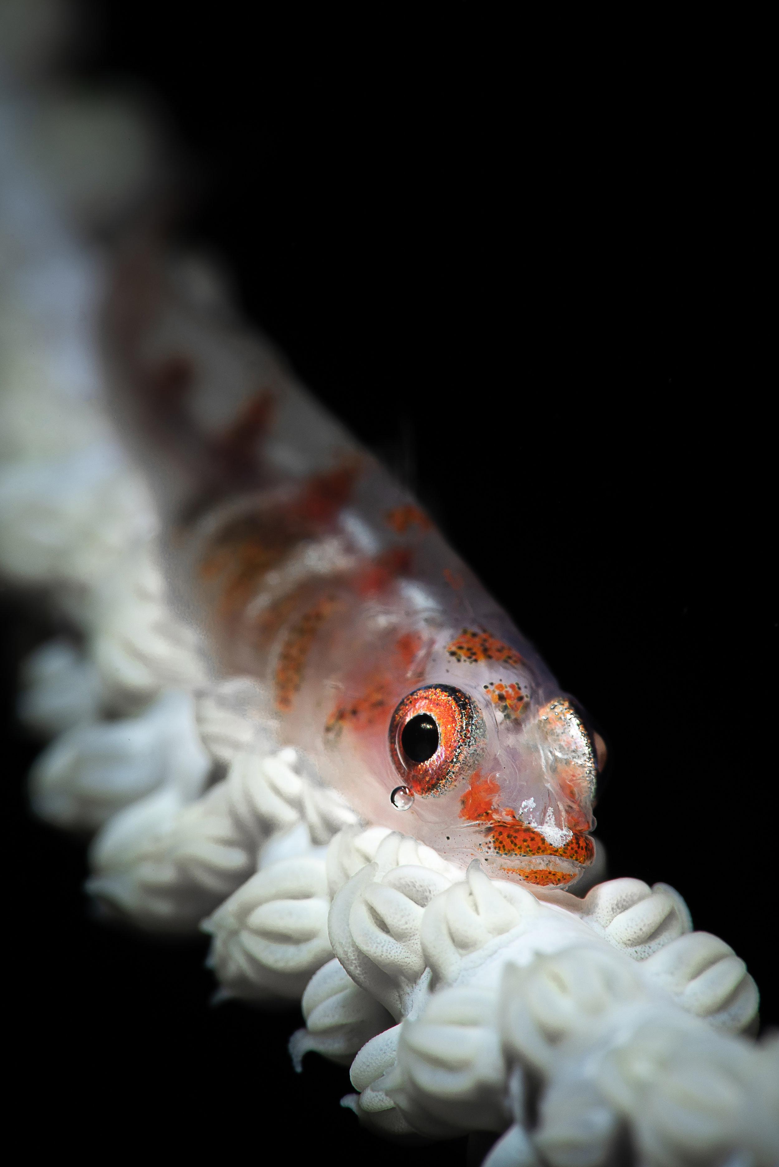 credit: François Baelen / coral reef image bank