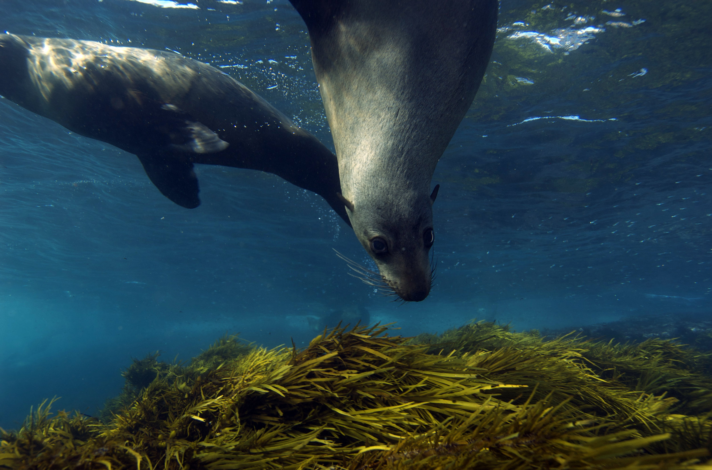 GALAPAGOS SEA LIONS CREDIT: THE OCEAN AGENCY / coral reef image bank