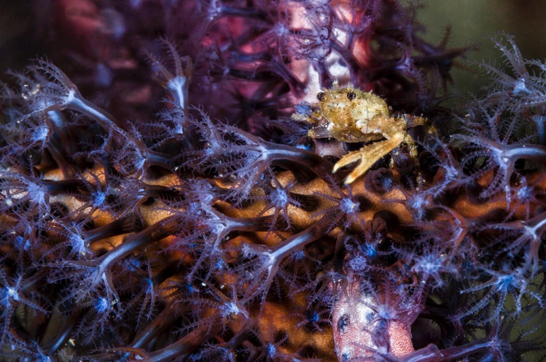 credit: david robinson / coral reef image bank