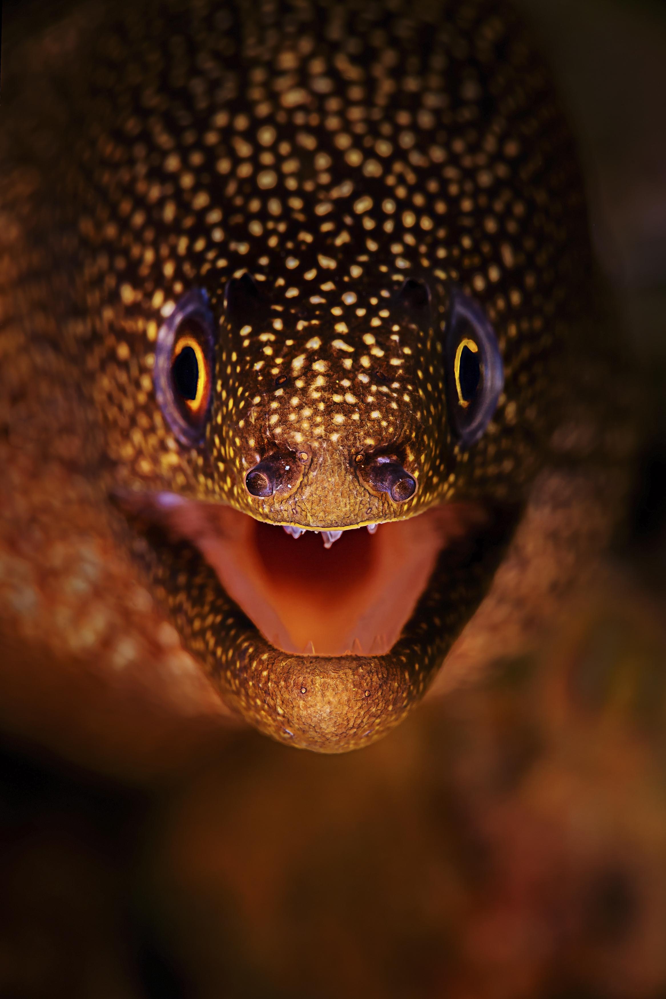 moray eel credit: beth watson / coral reef image bank