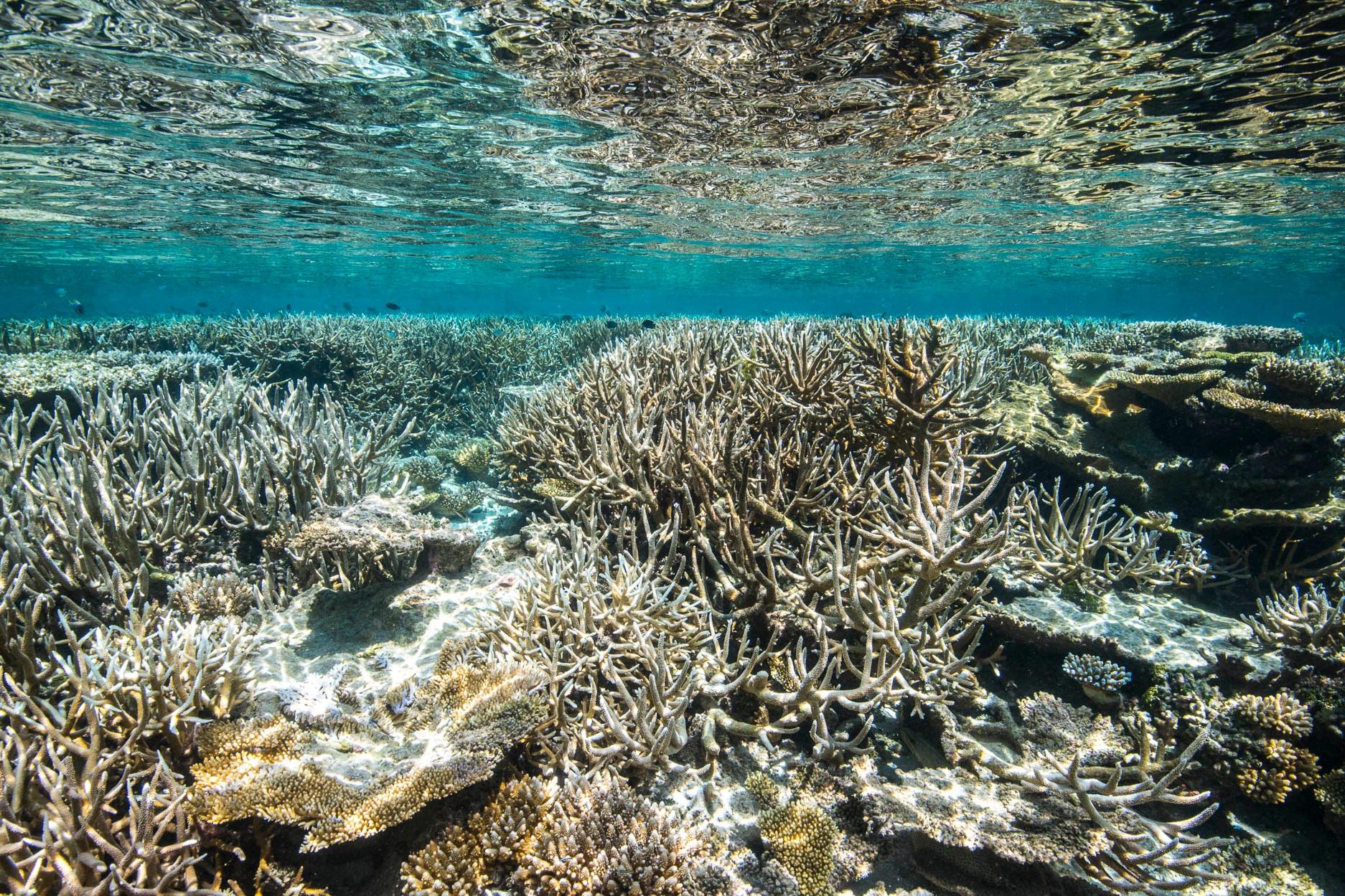 GAAFU ALIFU ATOLL, MALDIVES CREDIT: WARREN BAVERSTOCK / coral reef image bank