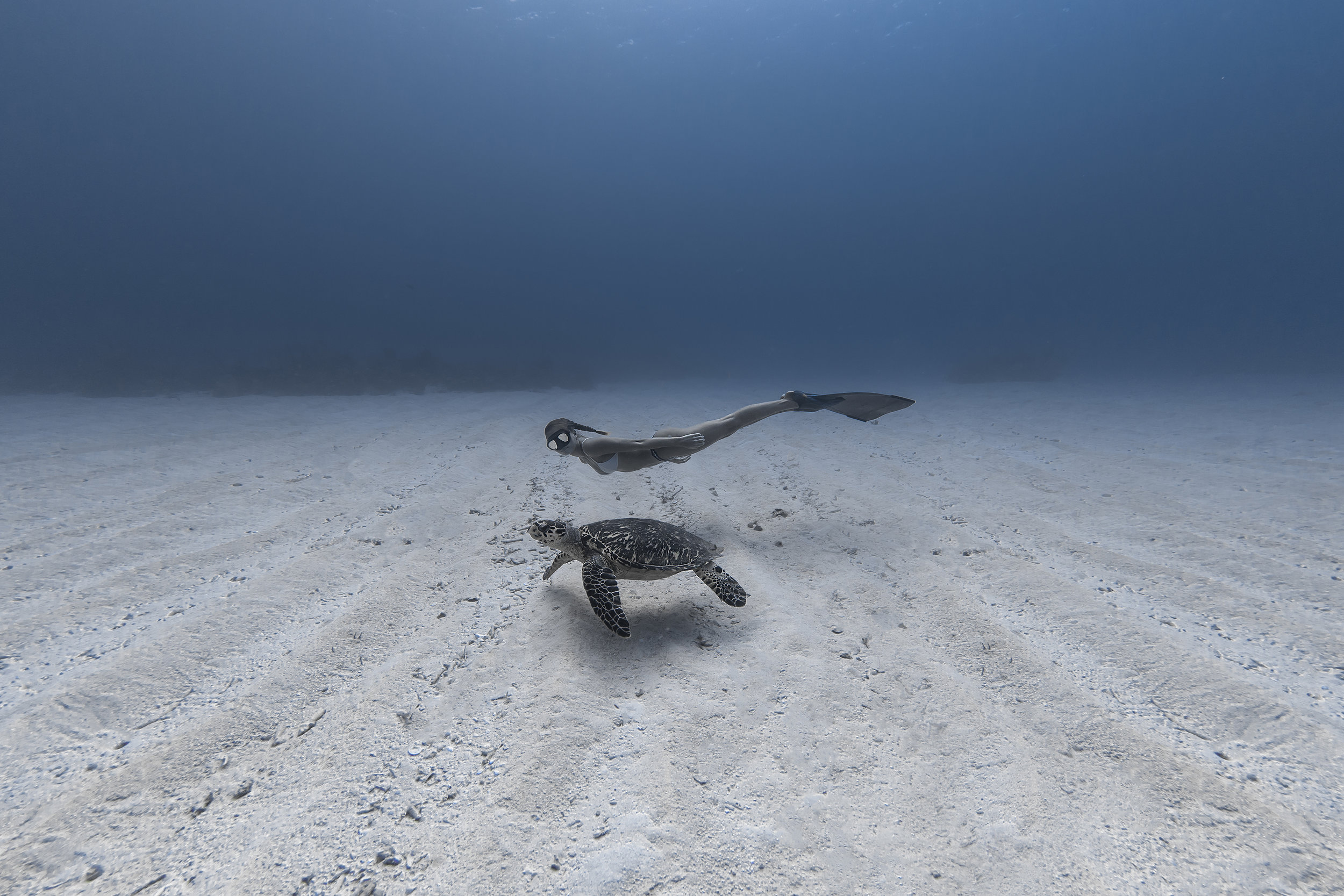 Turtle and freediver in the cayman islands CREDIT: Jason Washington / Coral Reef Image Bank