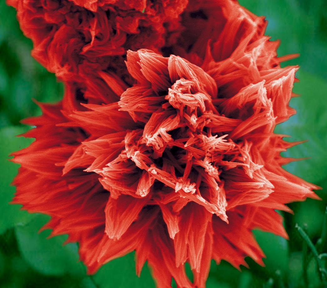 5. Fiery flower