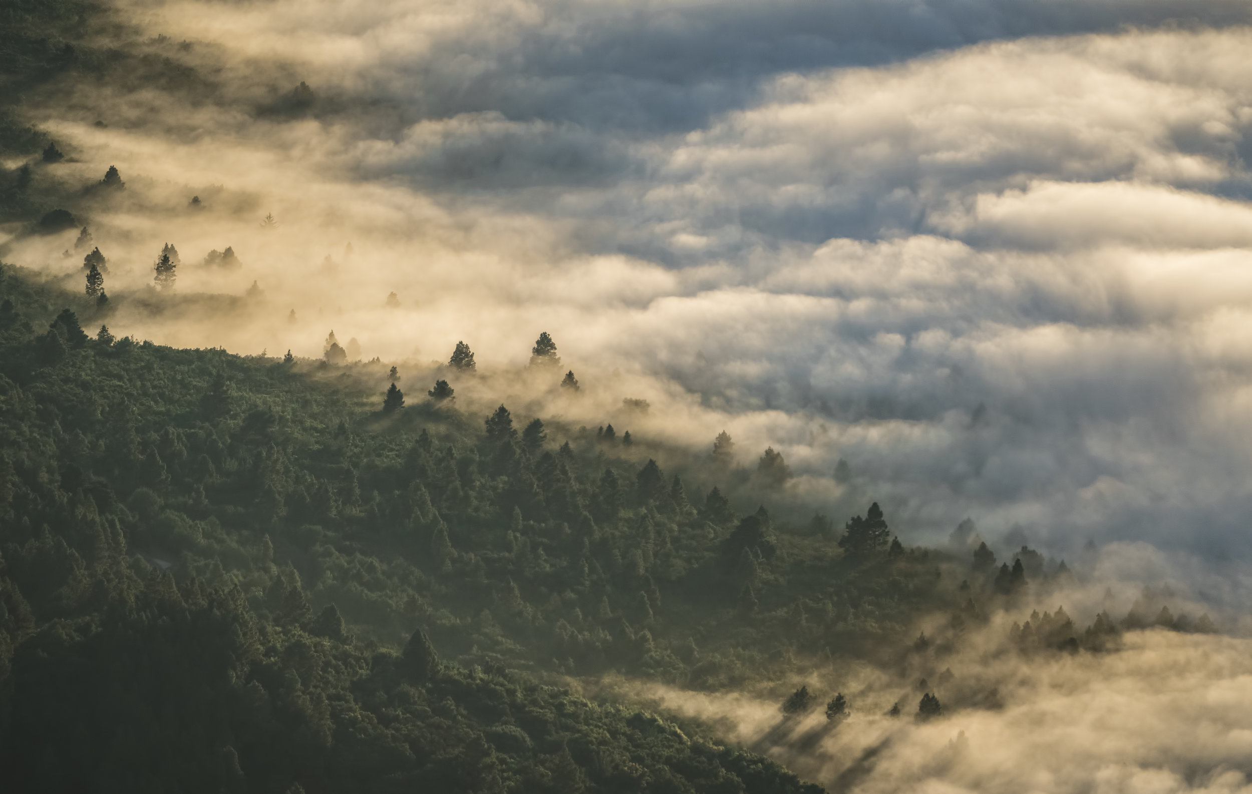 Misty clouds floating over evergreen trees