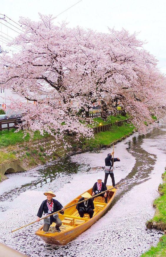 cerejeiras.jpg
