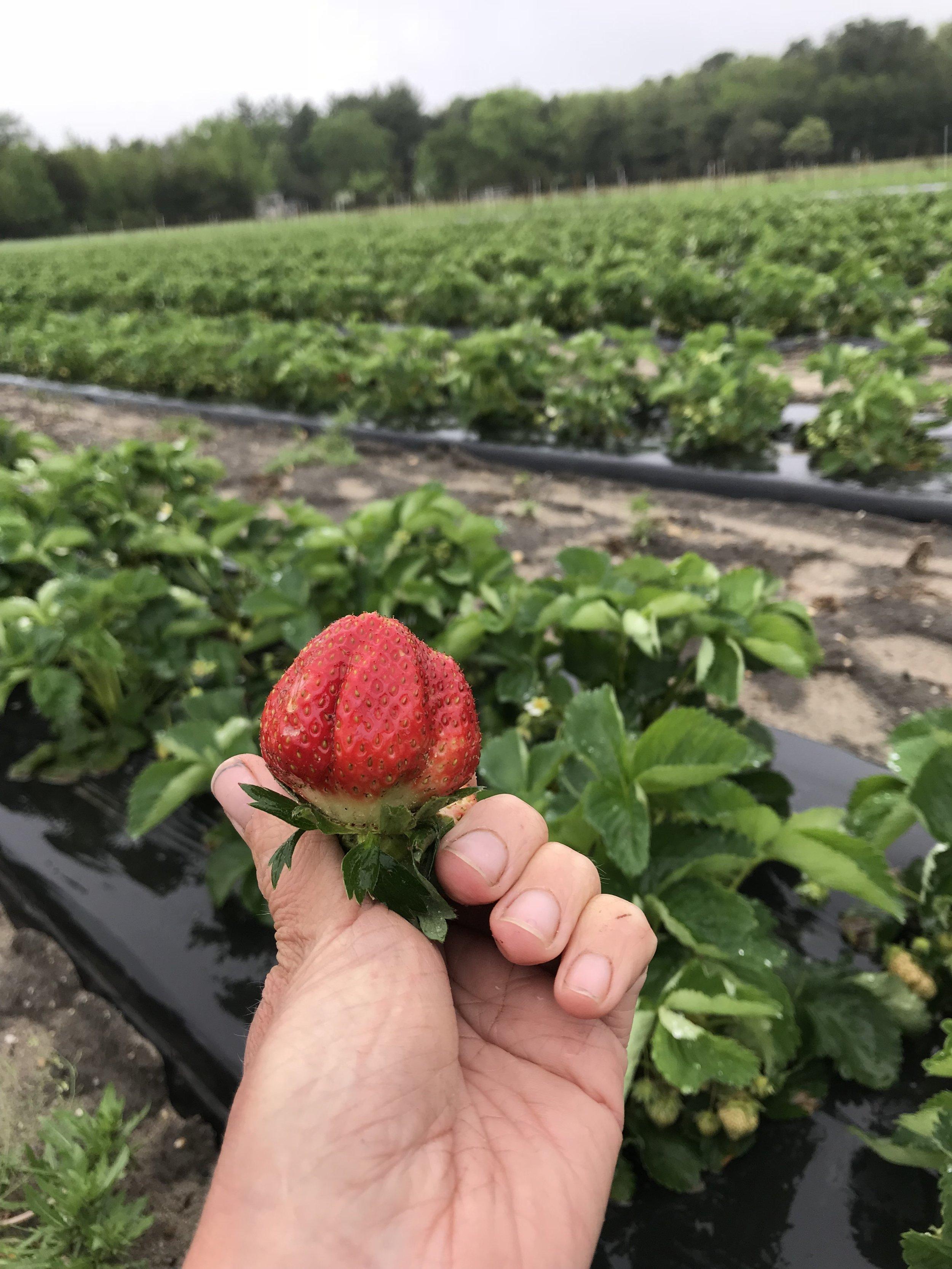 sberries.jpg
