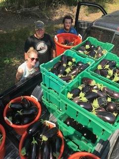 wk7 eggplant.jpeg