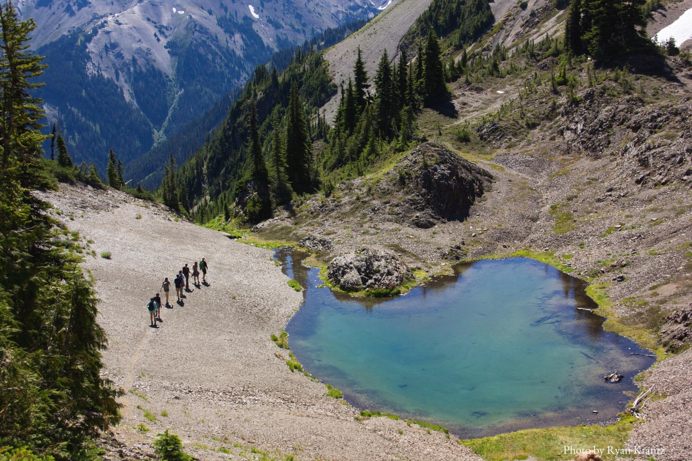 RyanKrantz_AlpineEcology_OlympicNationalPark2.jpg