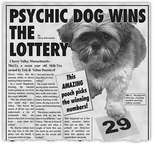 psychicdog.jpg