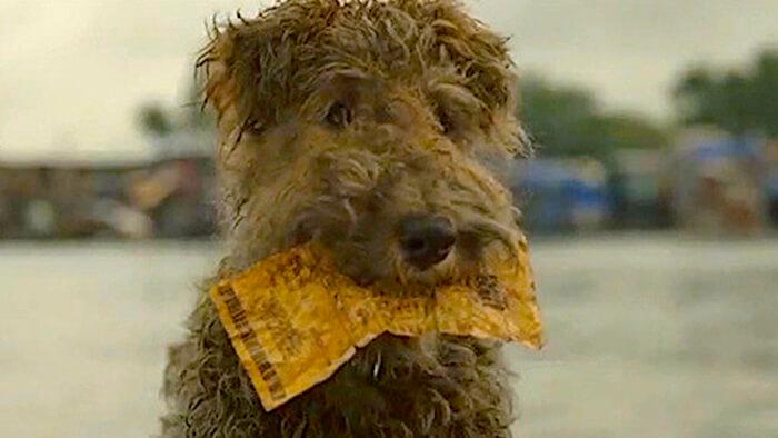 dog-lotto-ticket-2.jpg