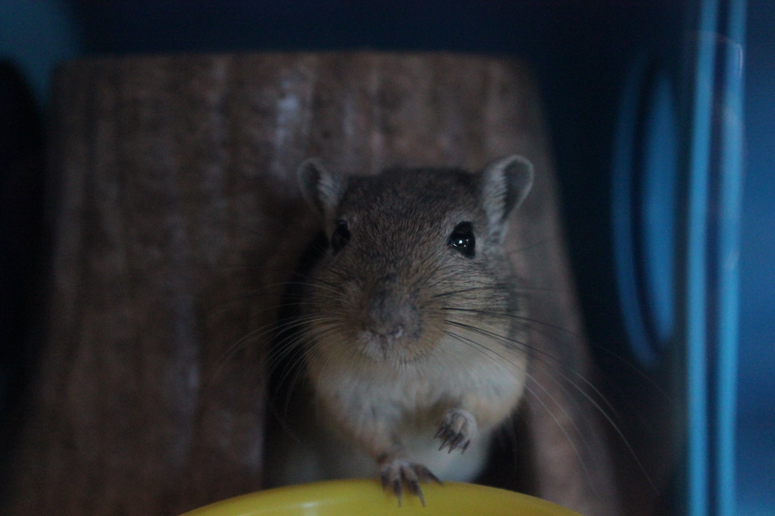Baby Hammy - When he first came to us, he was quite shy and not very trusting of us yet.