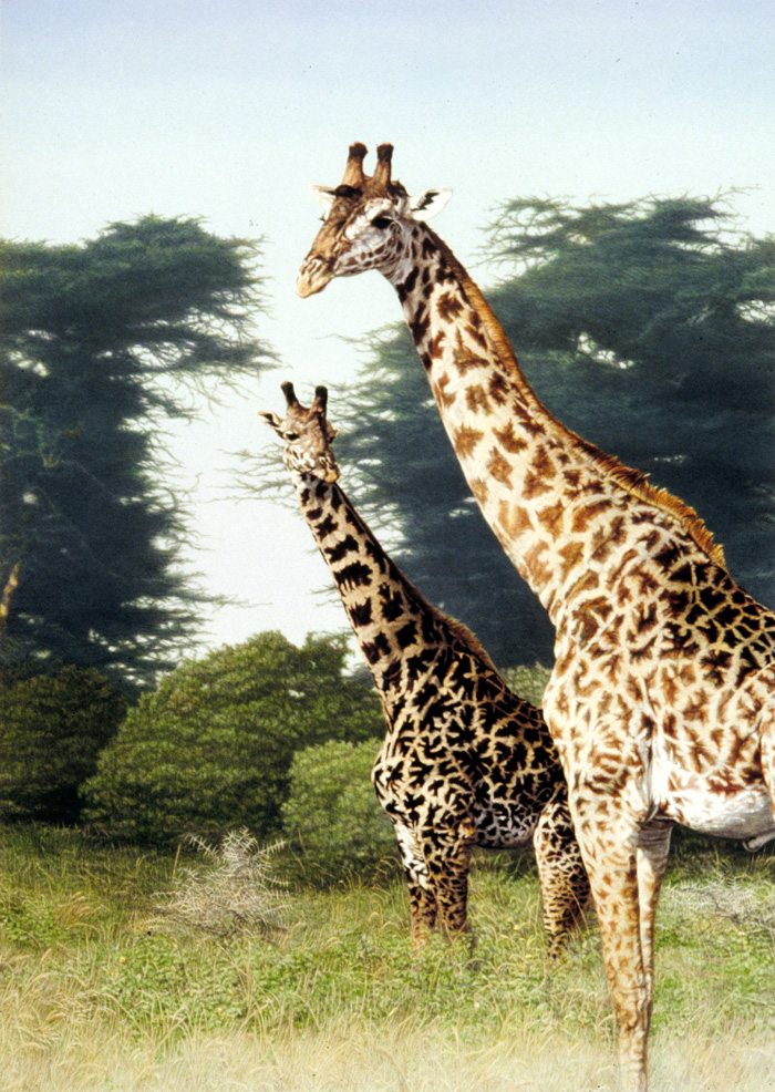 """Giraffes of Manyara""   by Dennis Curry"