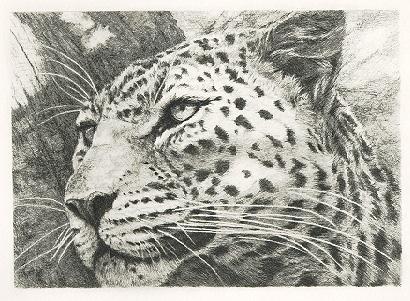 "Leopard Portrait""   by Dennis Curry"