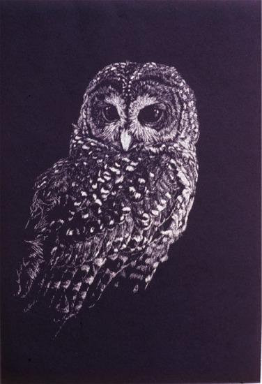 """Short Ear Owl""   by Dennis Curry"