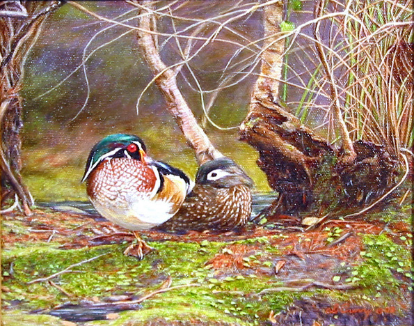 """Wood Duck""  by Dennis Curry   I found these colorful little ducks along one of the many water ways of central Florida."