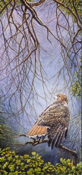 """""""Red Tail""""   by Dennis Curry    Sunlight touches a hawk in the deep shadows of an oak woodland."""