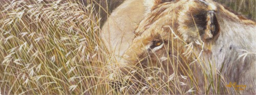 """Lion in the Grass""   by Dennis Curry    The tawny color and tall grass make the lioness difficult to spot as she hunts the African Savanna."