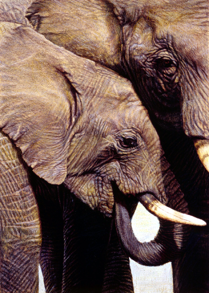 """""""Elephant's Child""""   by Dennis Curry    The protective maternal love for their young have endeared the elephant to many. This intimate portrait depicts their familial closeness."""
