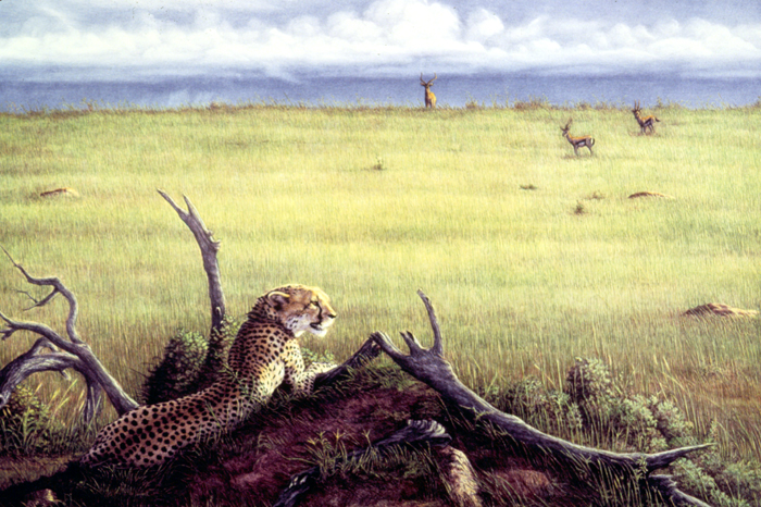 """""""On the Mara""""   by Dennis Curry"""