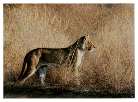 """""""Morning Hunt""""   by Dennis Curry"""