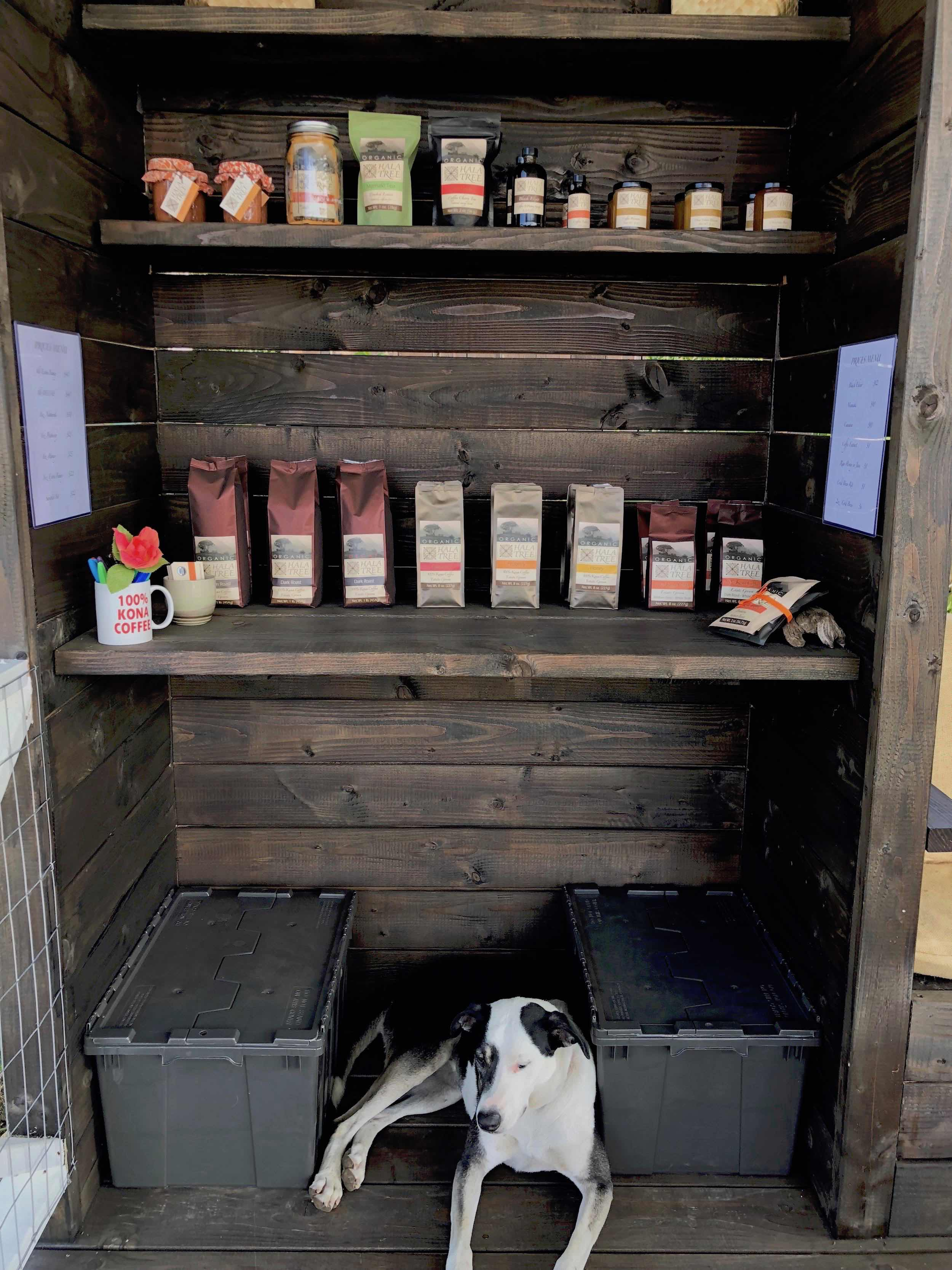 coffee farm dog at Hala Tree greets customers.