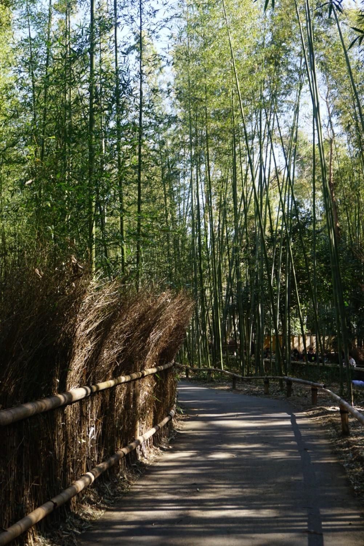 Arashiyama Bamboo Forest pathway in Kyoto, Japan.