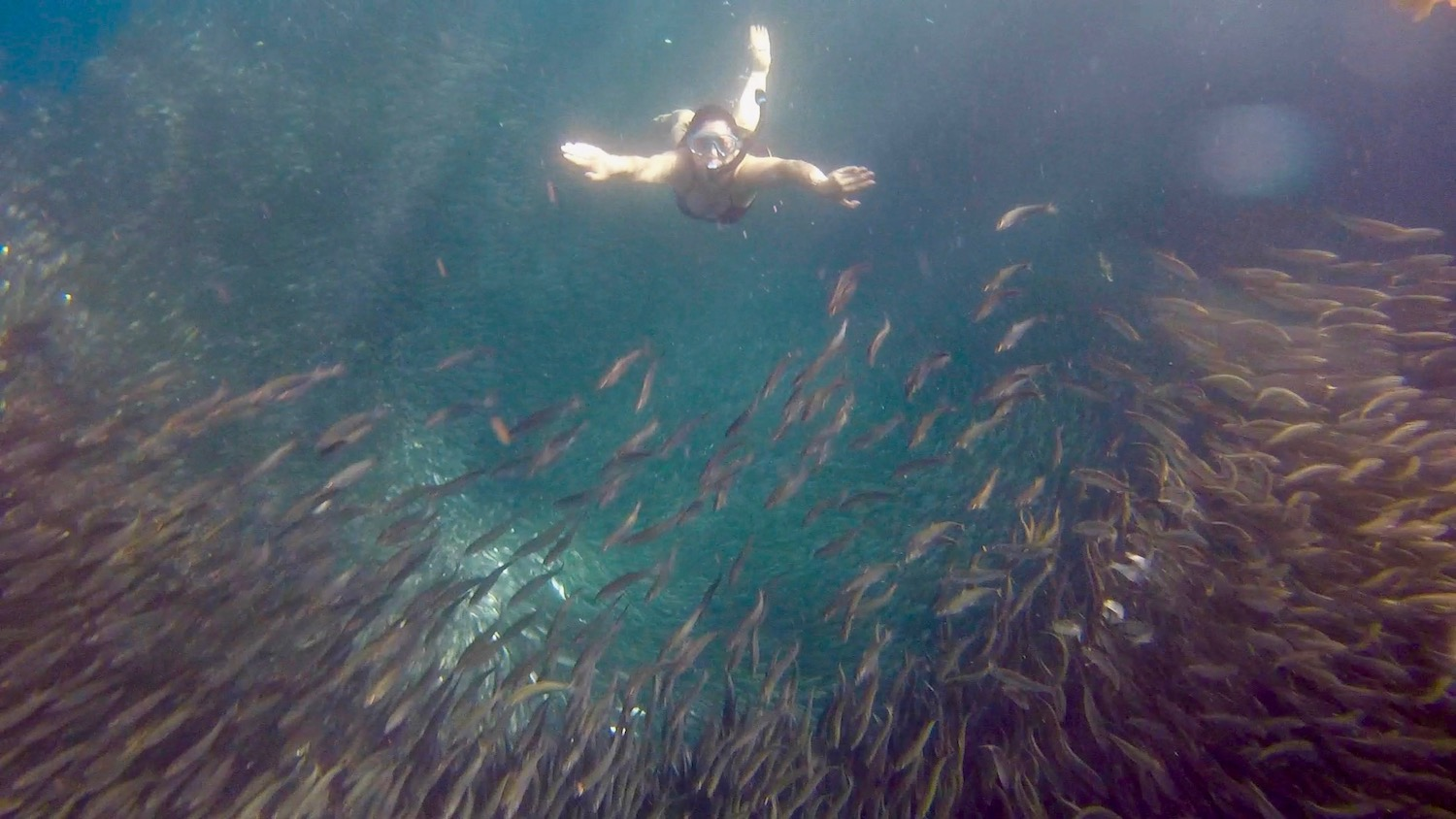 Woman dives into one of the worlds largest sardine runs (massive school of sardines) off of the coast of Cebu, Philippines. boldlygotravel.com